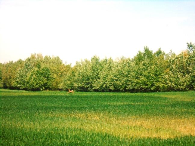 Dom a pozemok na samote pri Kolárove