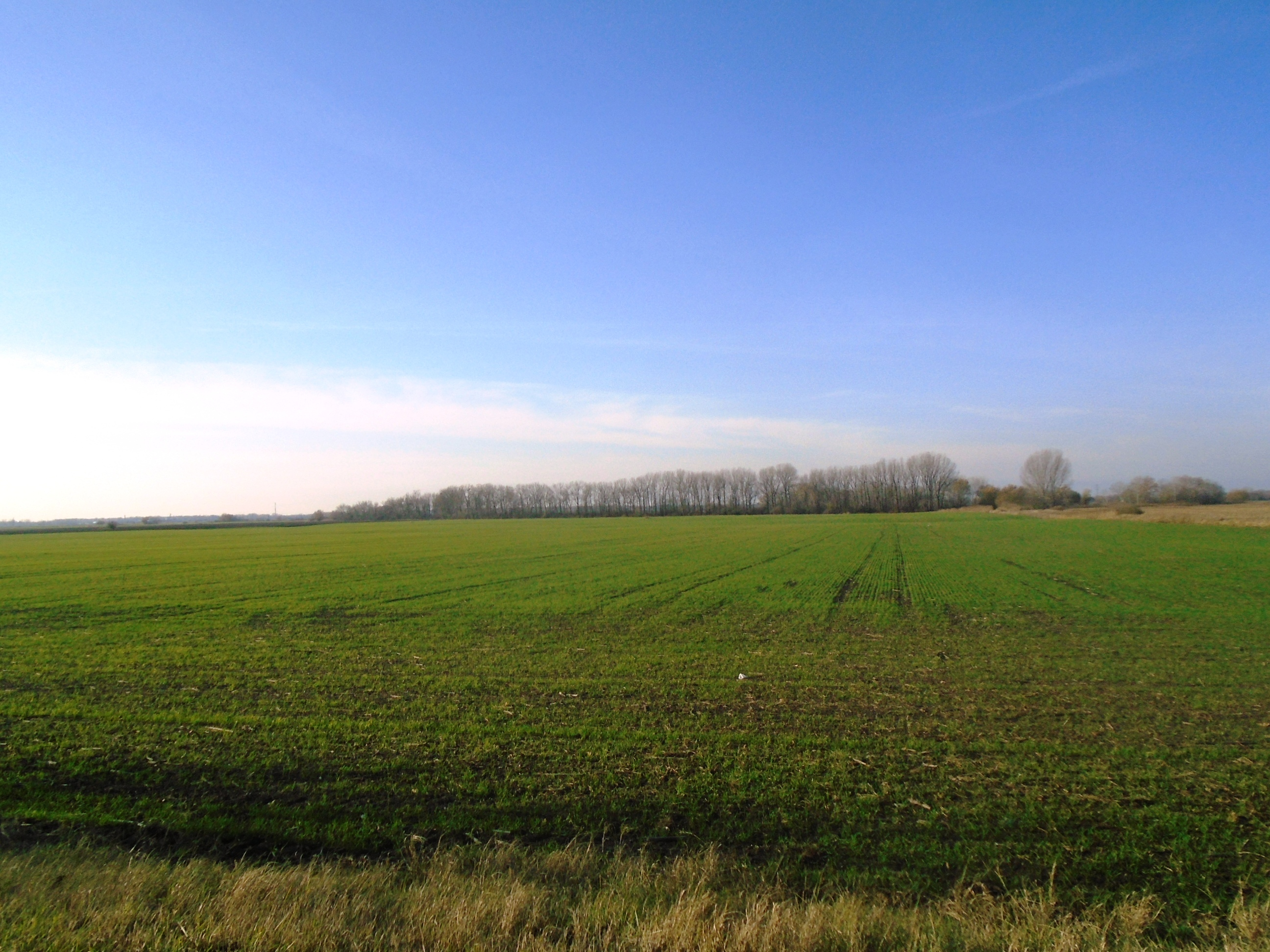 PREDANÉ - Búč - orná pôda na predaj