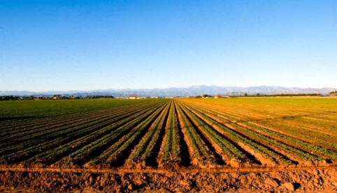 Predaj ornej pôdy, Lehnice - okres DS